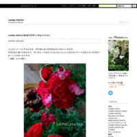 LIVING PHOTO 花の色でデザインするクリスマス - LIVING PHOTO