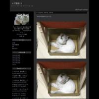 三毛猫、長毛種さんの動画紹介です。 - メグ通信12