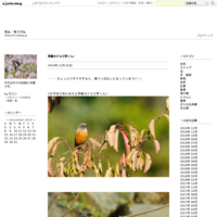 birds '16 - ちん・ちくりん