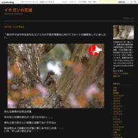 オシドリの雛の滝登り!動画編 - イチガンの花道