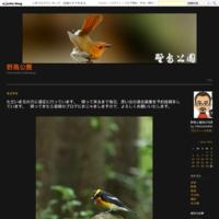 ただいま遠征中です(^^過去画像からクマタカです。 - 野鳥公園