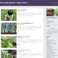 松本一本ネギとキャベツ - my small garden~sugar plum~