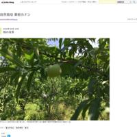 大豆選別作業 - 自然栽培 果樹カナン
