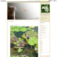 おもしろい猫たち - 野の花