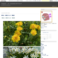上野広小路交番前の桜 - dragonJJ ? yes、hananokao OK *[⌒◎⌒]*