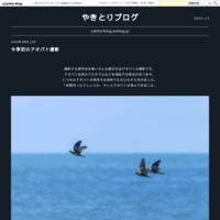 梅雨の向日葵 - やきとりブログ