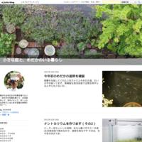 ミジンコ繁殖シーズン到来! - 小さな庭と、めだかのいる暮らし