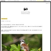 クロスジギンヤンマの産卵 - Kochikuro12's Blog