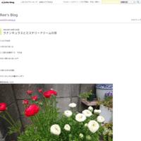 夏休み最後に… - Ree's Blog