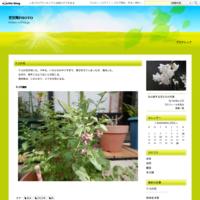 ドリフトローズ(秋) - 花空間PHOTO