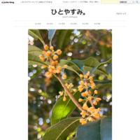 福寿草色のリボン ✧*. メルカリのお買い物 - ひとやすみ。