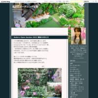 夏休み 修善寺旅行3日目 - 恋子のガーデニング日記