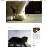 4月はトムちんと一緒に仙台へ - がんばる猫