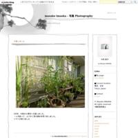 再生・蘇生・光 - masako imaoka - 写真 Photography