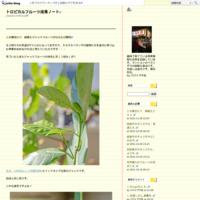種から育てた鉢植えカニステルが初開花!その3 - トロピカルフルーツ成長ノート