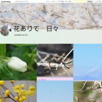 白藤、キショウブ、ハンカチの木 - 花ありて 日々