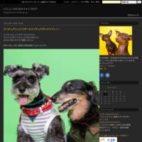奈良で撮影会 - いとしい犬たちのフォトブログ
