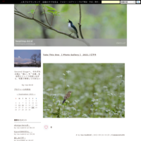 高原の草原で夏小鳥に会ってきました - healing-bird