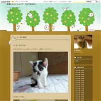 6月25日(日)保護猫ハウス里親会。 - 青梅にゃんにゃん・サークル「WISH」