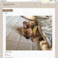 アル君 - Etsuko's Photolog