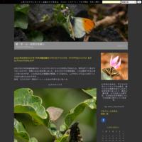 ようやく5月中下旬に多摩地区で見た蝶を紹介です。〜2018年5月19日、20日 - 蝶・花・山~自然の色使い