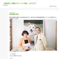 NHK WORLD「Direct Talk」放送のお知らせ - 一般財団法人 国際セラピードッグ協会 公式ブログ