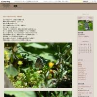 ヒメヒカゲ他5月24日 - 超蝶
