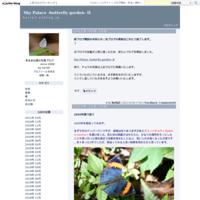 普通種たち(2020/05) - Sky Palace -butterfly garden- II