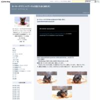 ヨークシャーテリア子犬05/25生れオス『2号』・仔犬 | 【york180525m002mama】k10 - ヨーキーチワワ、トイプードル日記(たまにMIX犬)