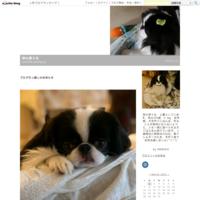 七夕☆彡犬手作りおやつ☆ボストンレタス - 狆の茶々丸