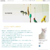 弘前シネマ—水族館の夢 - 花の写真手帳