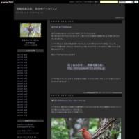 当ブログ、終了のお知らせ - 野鳥写真日記 自分用アーカイブズ