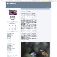 イチモンジチョウ緩み見える外出自粛 - 蝶のいる風景blog