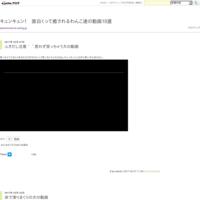 柴犬ジロー大雪で・・・ - キュンキュン! 面白くって癒されるわんこ達の動画10選