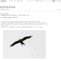 オオルリとキビタキ:2019年春 - のらのらからみ