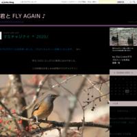 カンムリワシ幼鳥@西表島2019 Part.1⑥♪ - 君と FLY AGAIN ♪