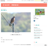 オジロトウネンはコチドリと仲良し(?) - 四十雀の欣幸 ~野鳥写真日記~