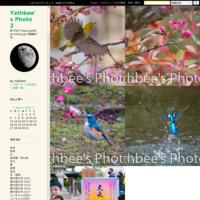~ ウスバキトンボ ~2018.7 - Yathbee's Photo 2