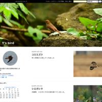キアシシギ - Y's bird