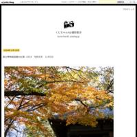 神宮外苑の銀杏並木の黄葉2018 - くにちゃん4@撮影散歩