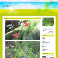 いまごろはラベルの生産国を確認してモノを買うようになった詩7月3日(火)雨・台風 - トチノキの詩2