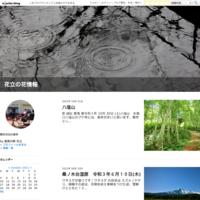 御浜周辺ふくら ヨリ 七里 - 花立の花情報