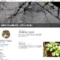 ギボウシ実生の発芽を確認 - 猫屋の今日も園芸日和
