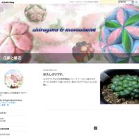 針休めコースター - 白絹と桃花