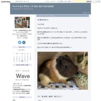 7月のキャンペーン - ペットショップウェーブ TEL 047-453-8250