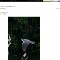 色々 - コロンさんの野鳥ブログ