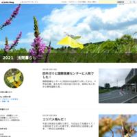 雨の中ヒメキマダラセセリ - 2021 浅間暮らし(ミヤマシジミ便り)
