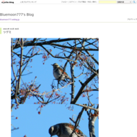 夕餉の後 - B・Mの写真ブログ