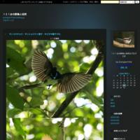 コロナ激減減少干潟で鳥見実行三密にならずCM3名 - 151@の野鳥と自然