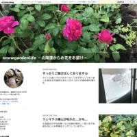 開花 - snowgardenlife ~北海道からお花をお届け~